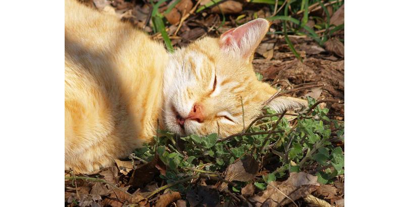 cats-on-nip-16