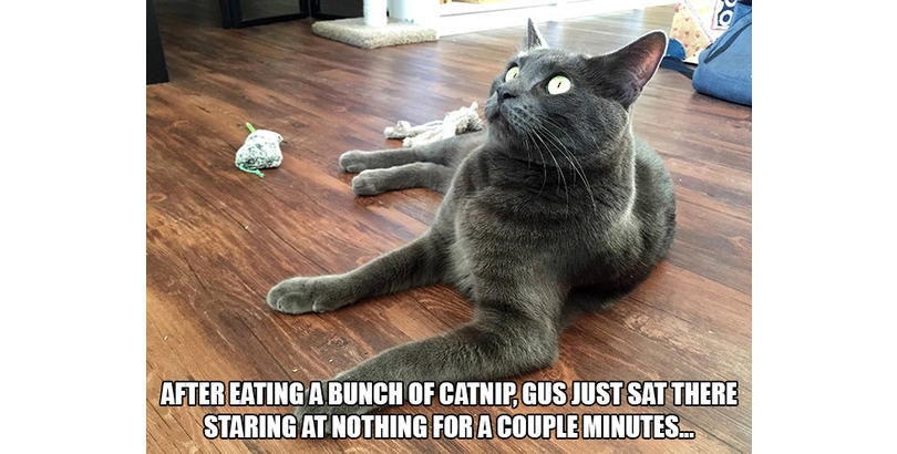 cats-on-nip-17