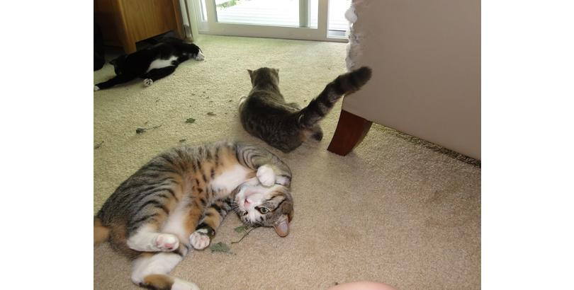 cats-on-nip-19