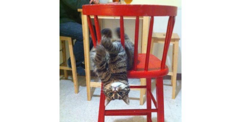cats-on-nip14