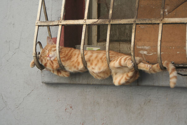 cute-melted-cat-9