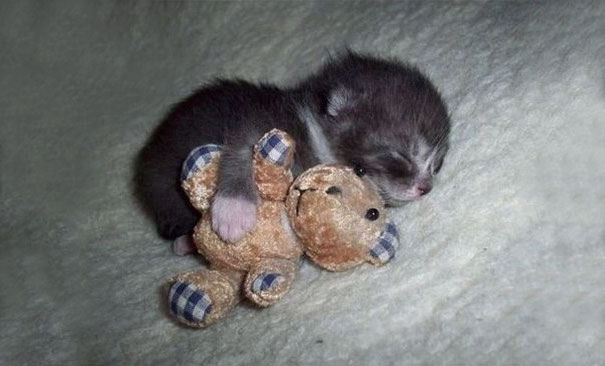 cutest-kittens-13