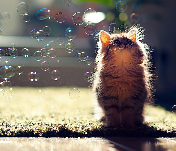 cutest-kittens-14