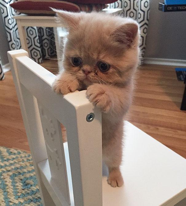 cutest-kittens-19