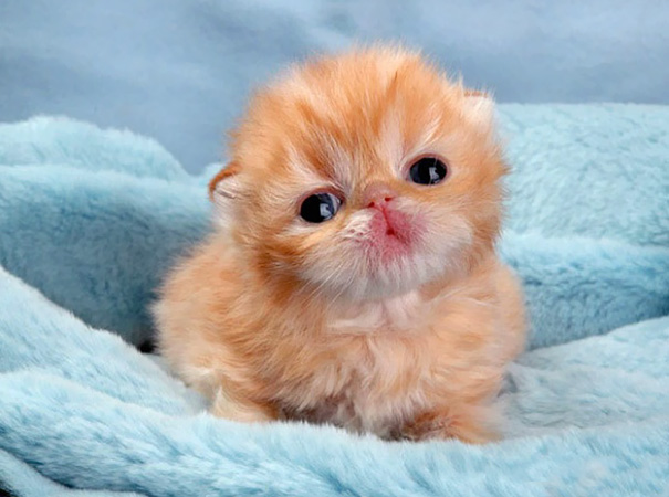 cutest-kittens-20