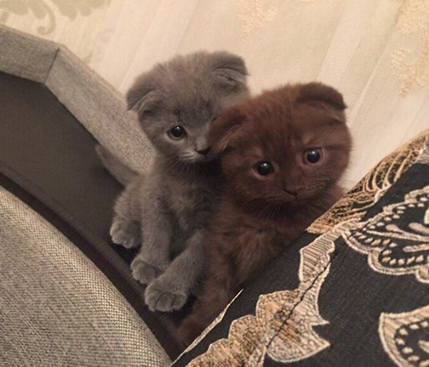 cutest-kittens-22