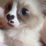 cutest-kittens-24