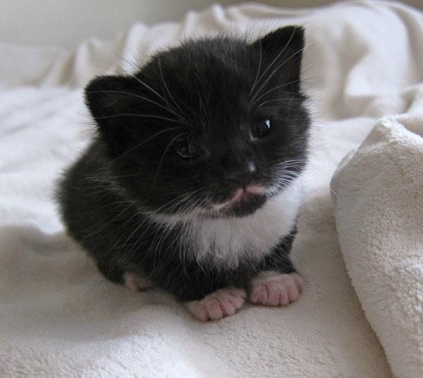 cutest-kittens-25