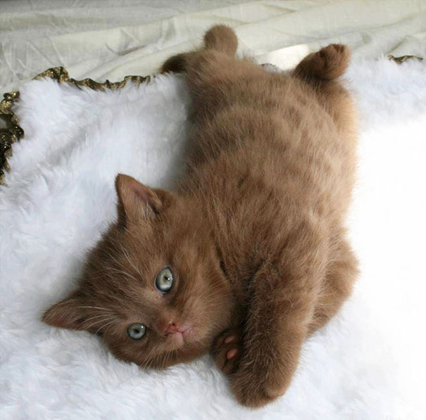 cutest-kittens-26