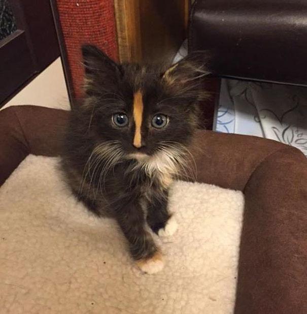 cutest-kittens-28