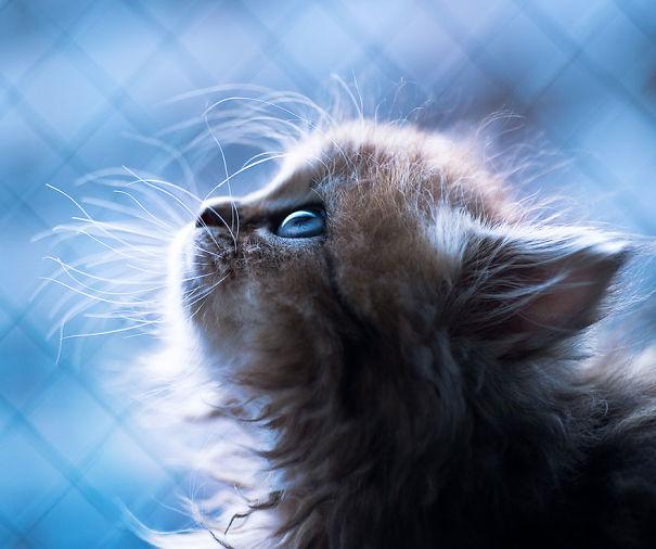 cutest-kittens-30