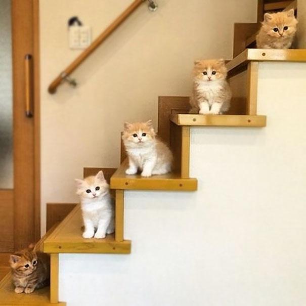 cutest-kittens-32