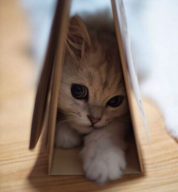 cutest-kittens-34
