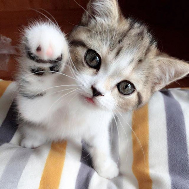 cutest-kittens-38
