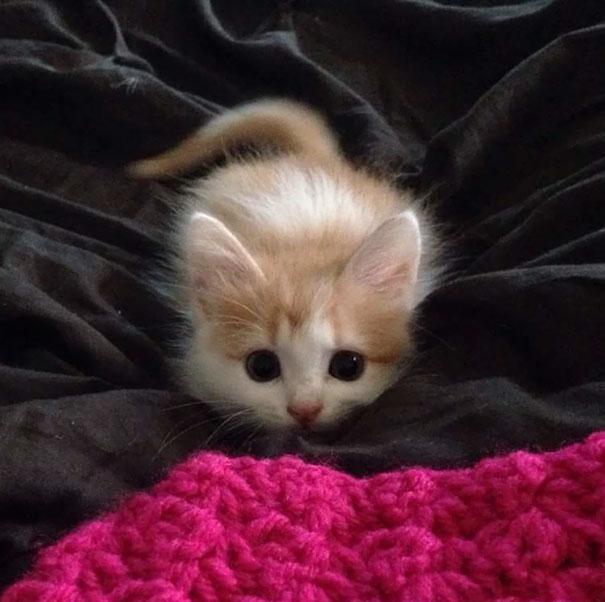 cutest-kittens-5