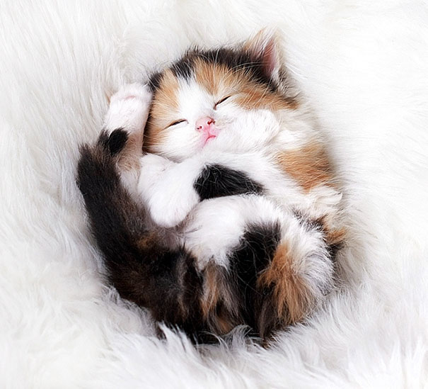 cutest-kittens-7