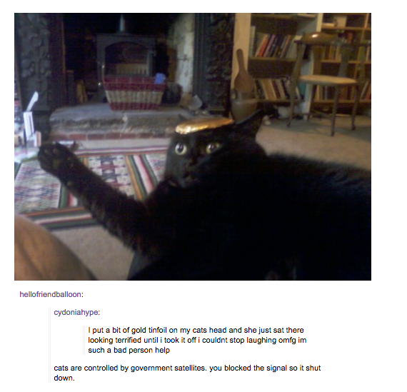 deserving-cats-09