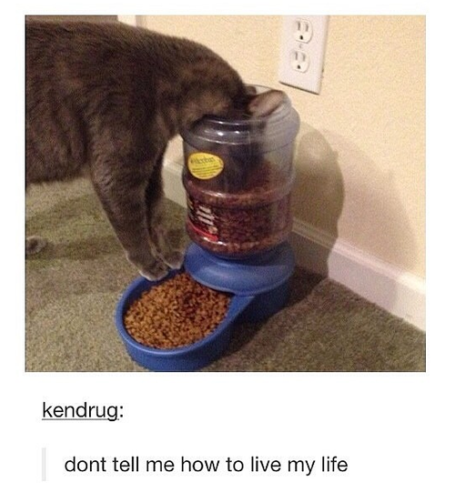 deserving-cats-11