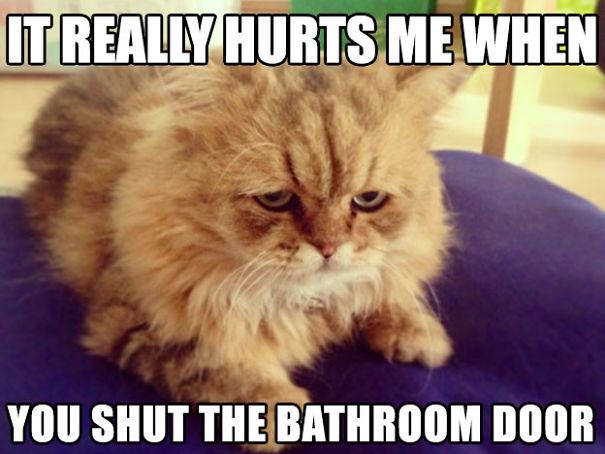 first-world-cat-problems-16