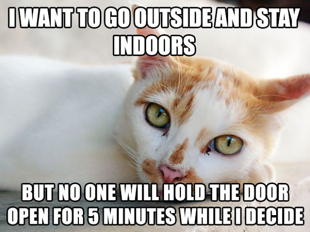 first-world-cat-problems-17