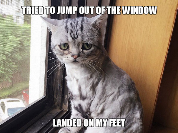 first-world-cat-problems-22