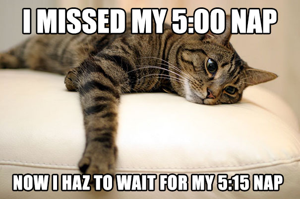 first-world-cat-problems-26