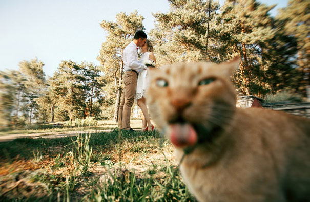 funny-cat-photobombs-01