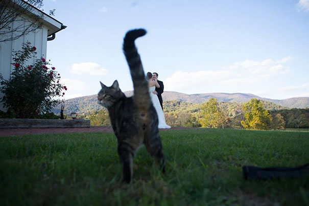 funny-cat-photobombs-05