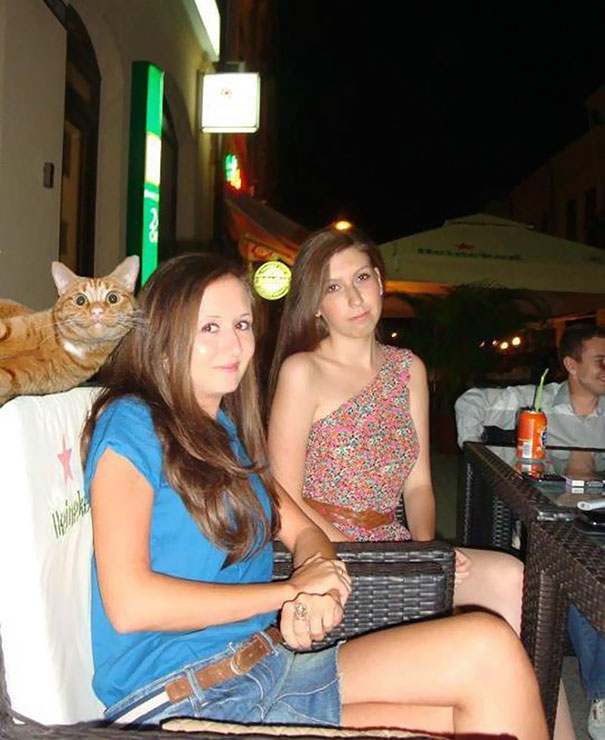 funny-cat-photobombs-09