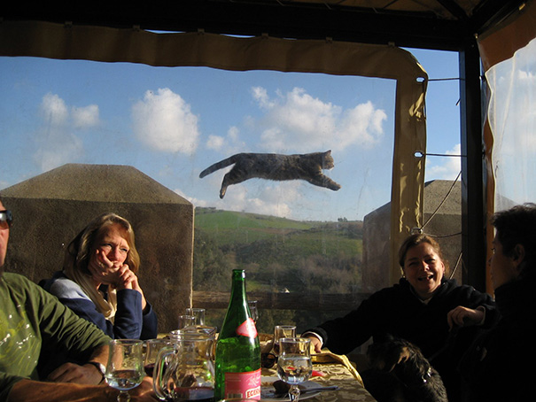 funny-cat-photobombs-10