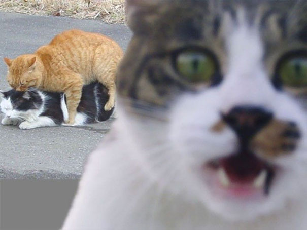 funny-cat-photobombs-14