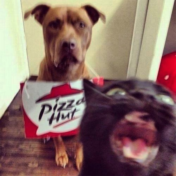 funny-cat-photobombs-20