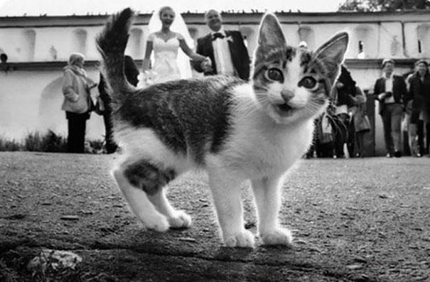 funny-cat-photobombs-23
