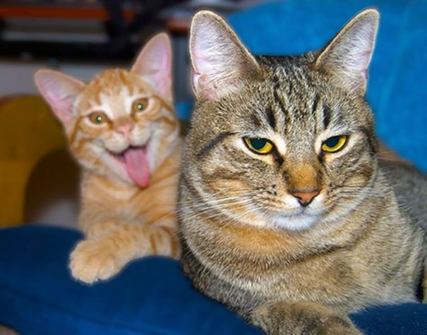 funny-cat-photobombs-25