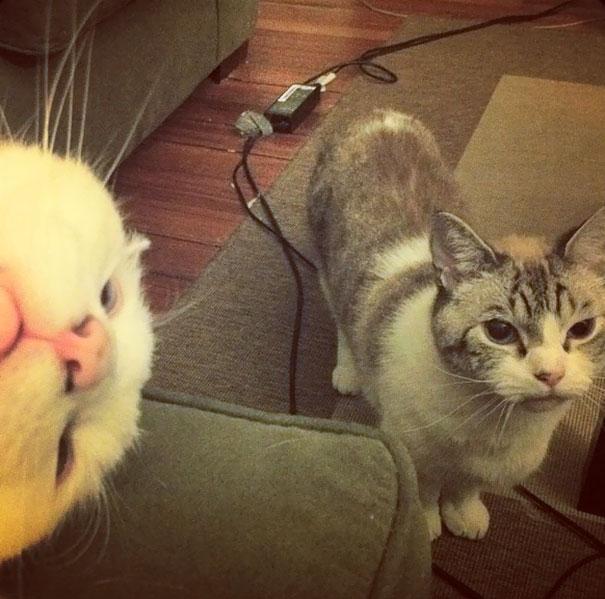 funny-cat-photobombs-26