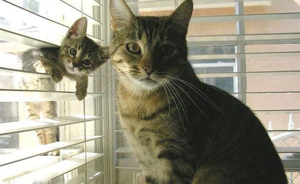 funny-cat-photobombs-33