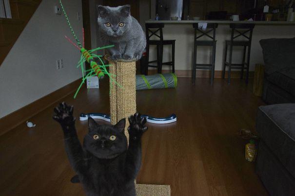 funny-cat-photobombs-34
