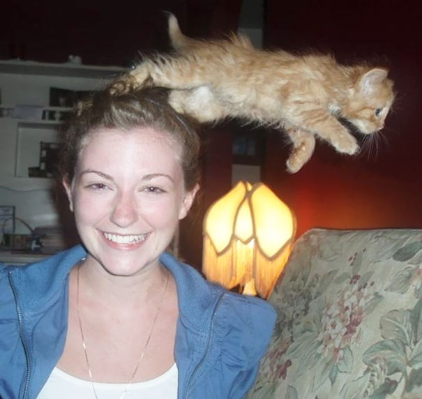 funny-cat-photobombs-36