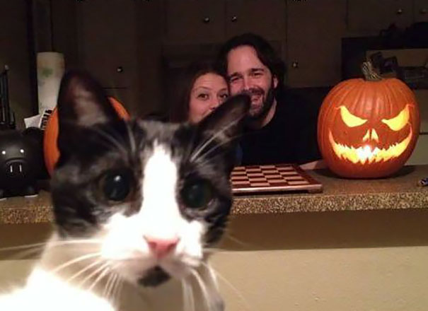 funny-cat-photobombs-37