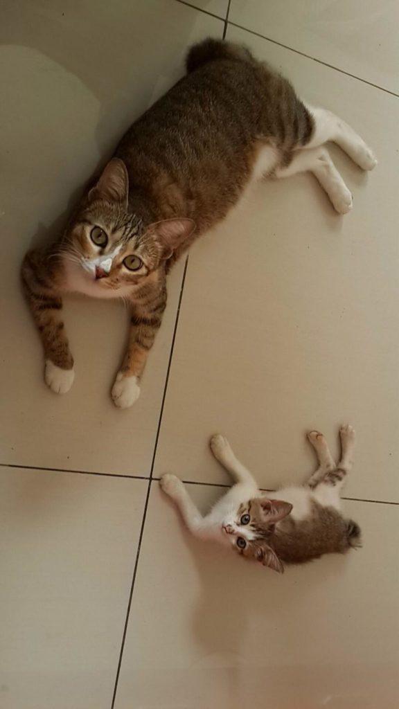 mini-me-cat-23