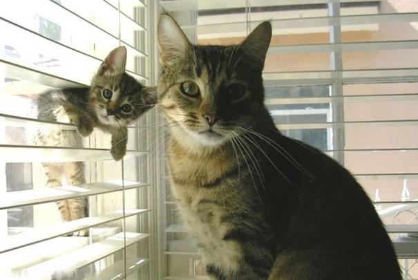 mini-me-cat-3