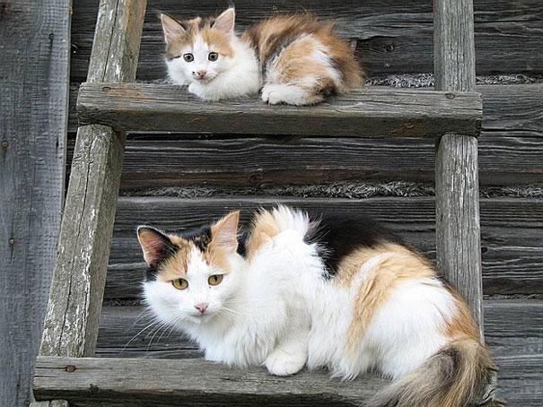 mini-me-cat-4