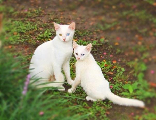 mini-me-cat-6