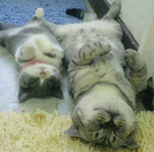 mini-me-cat-7