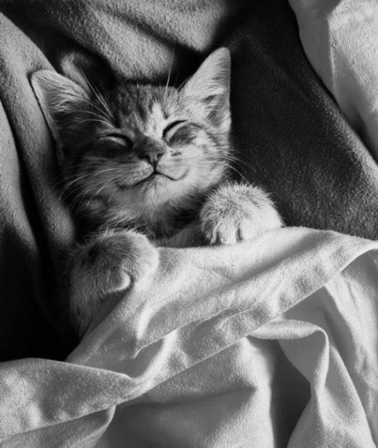 smiley-kitty-04