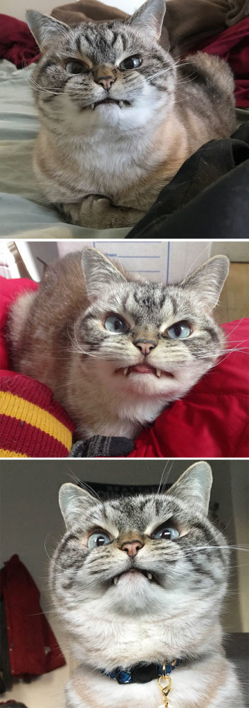 Angriest-Looking-Cats-1