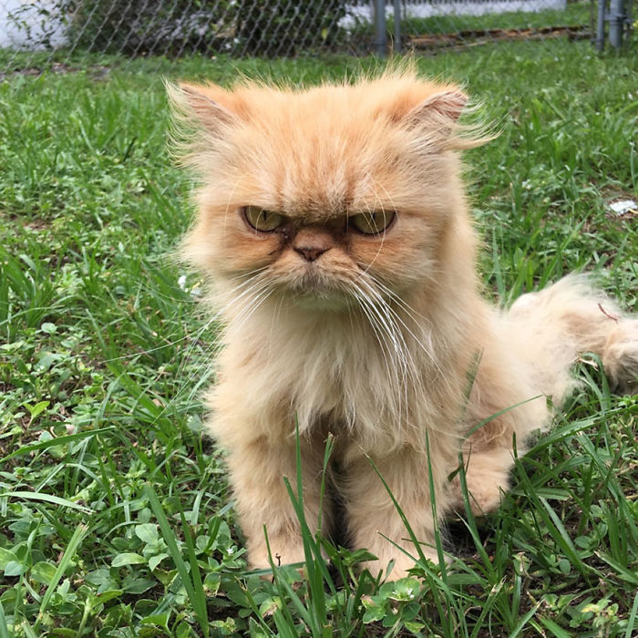 Angriest-Looking-Cats-26