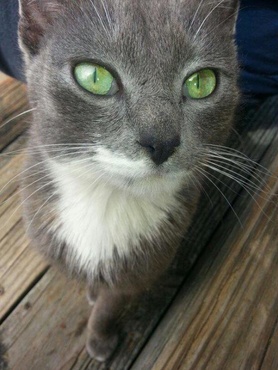 Cat-eyes-14