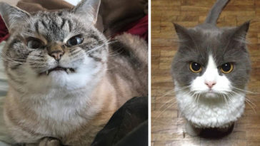 Featured-Angriest-Looking-Cats-FB