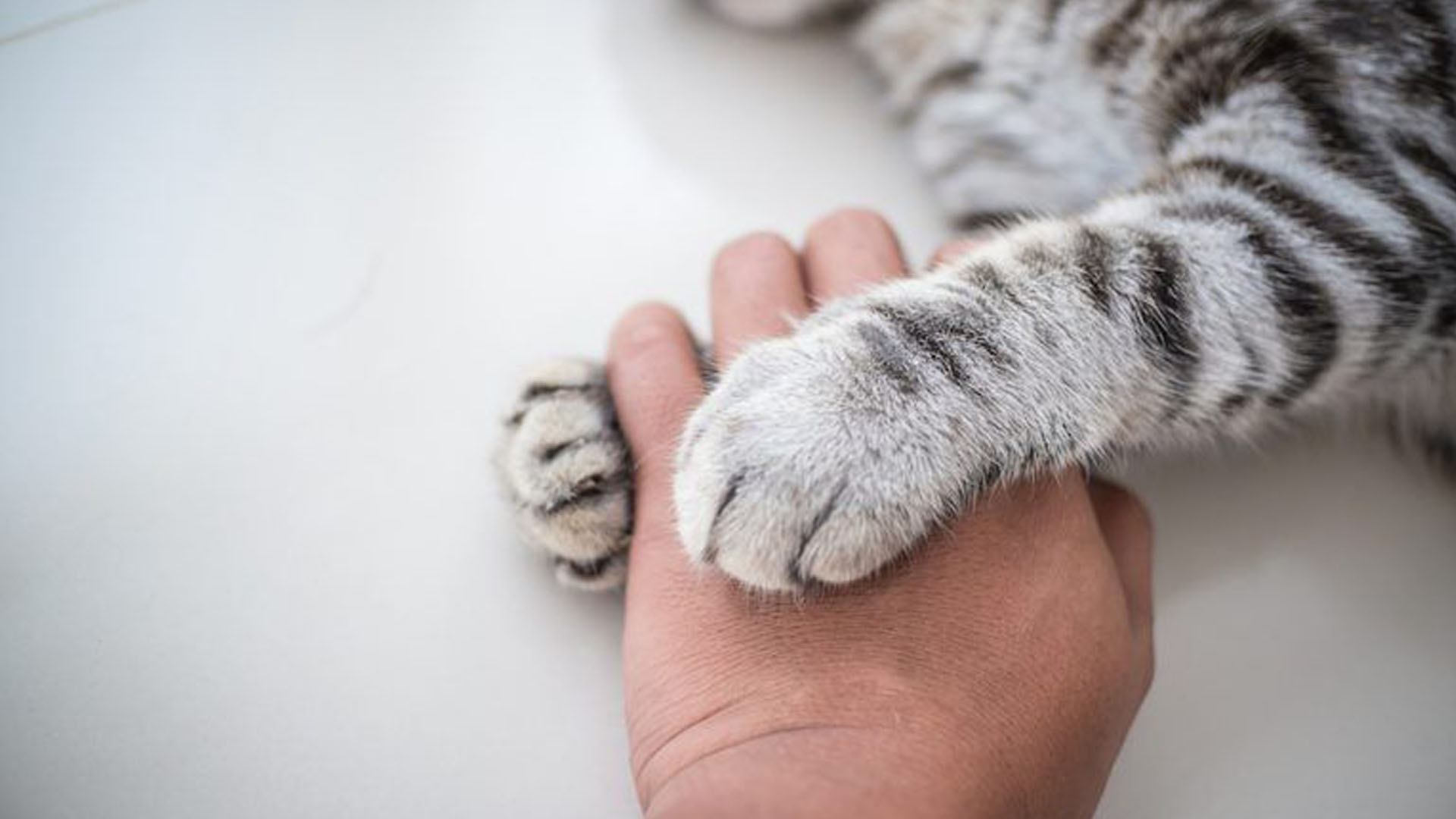 Weird Things That Cat Owners Think Are The Norm Purrshare - 12 heartbreaking first world cat problems